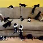 Много кошек на диване.