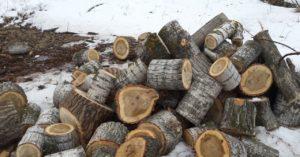 тополь дрова