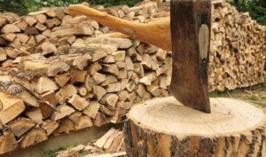 яблоня дрова