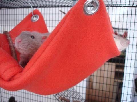 Гамак для крысы своими руками