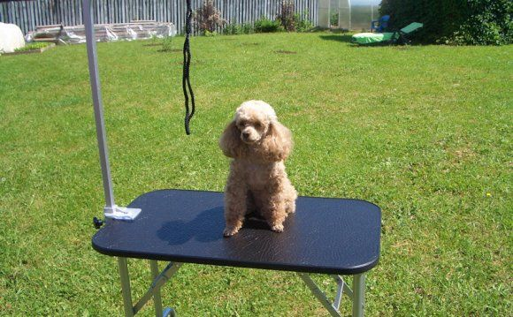 Стол для стрижки собак своими руками