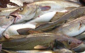 рыбный улов