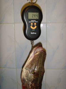 взвешивание рыболовными весами