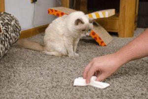 чем убрать запах кошачьей мочи с ковра