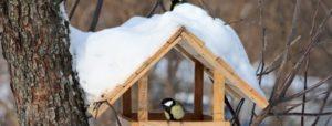 Основные правила построения кормушки для птиц