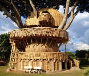 экодом из бамбука