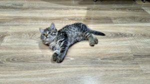 Как мы выбирали ламинат для кота