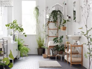 11 plants that you can put even... in the bathroom