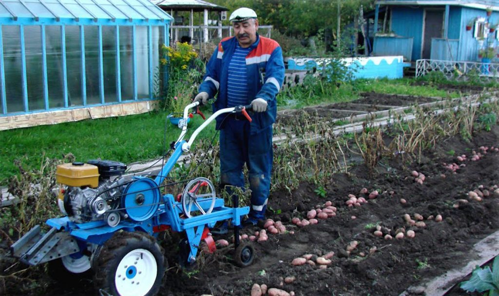 как копать картошку мотоблоком
