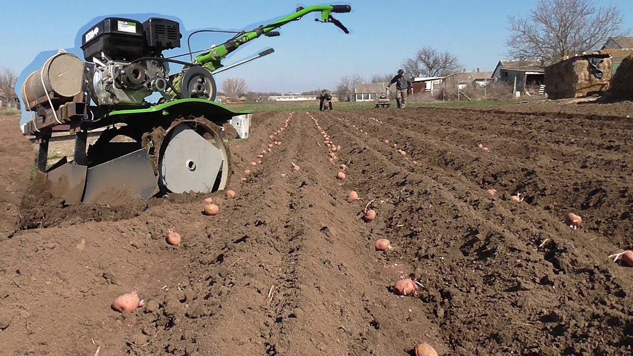 как сажать картошку мотоблоком