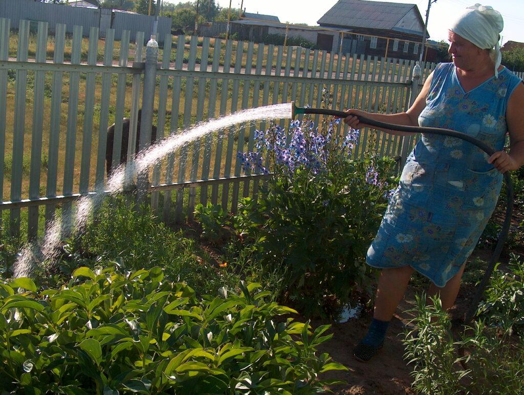 штраф за полив огорода